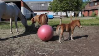 animale manzul comic
