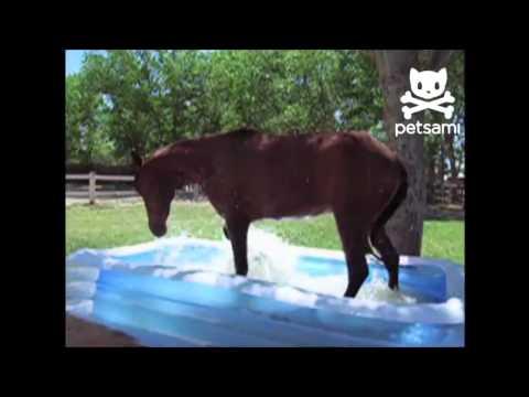 Лошадь купается в бассейне
