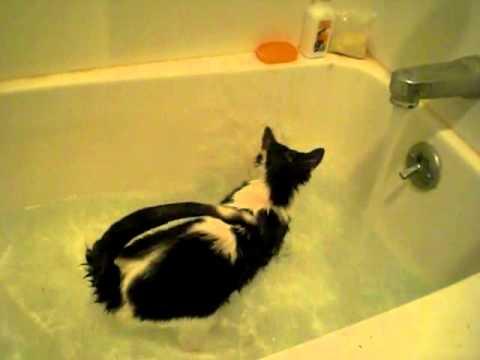 Katt som uppenbarligen gillar att bada