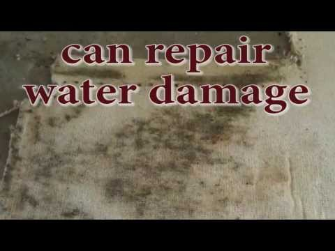 Water Removal Expert can Repair Water Damage and Prevent Further Mold Damage in Sarasota, FL