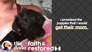 Woman Is Determined To Reunite Stray Dog With Her Puppies | The Dodo Faith = Restored by The Dodo