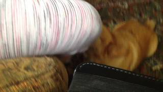 Aug 26, 2015 ... Cats and dogs react to RC toys - Funny animal compilation - Duration: 2:44. ... nToddler visits a PET SHOP  Dogs, Cats, Puppies, Kittens. ... PUPPY TOYS nPlayground - Super Duper Doggies Pooch Park for kids dogs and...