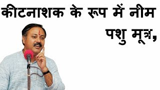 Video Rajiv Dixit on cattle urine, neem as insecticide | Farming MP3, 3GP, MP4, WEBM, AVI, FLV Juni 2018