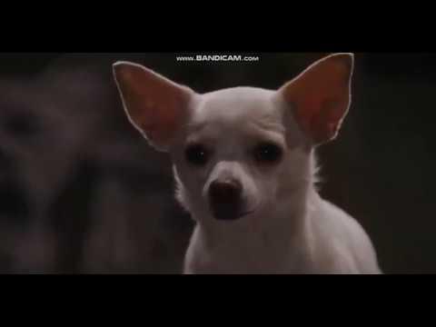 Beverly Hills Chihuahua - Chloe's Bark