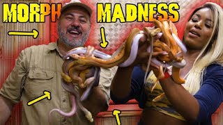 Retic Morph Madness: Jay and Kaye Wednesday by Prehistoric Pets TV
