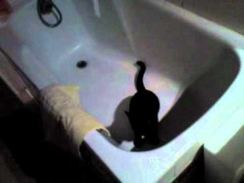 Tichat et la salle de bain