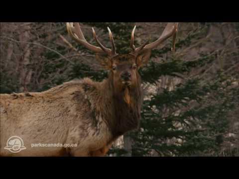 Video avHI-Jasper