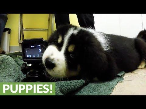 13-cuccioli-dal-veterinario