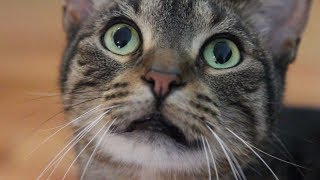 How Not to Make Your Cat Internet Famous | Mashable - YouTube