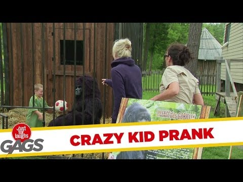 Crazy Kid Sneaks In Gorilla Cage - Youtube