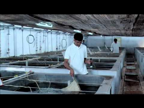 MPEDA – RGCA – Fish & Shrimp Culture – Value Addition