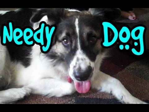 needy - GET THIS SONG ON iTUNES!!! Needy needs you! Click!!!: http://bit.ly/NeedyiTunes Tweet it! - http://www.tinyurl.com/DogTweet Follow Gypsy on Twitter http://tw...