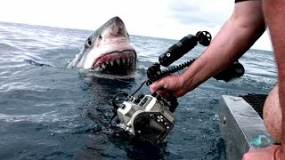 A 4.5 meter great white is captured in a dramatic photo while she explores her surroundings--with her mouth.  SHARK WEEK starts Sun July 5 8/7c on Discovery ...