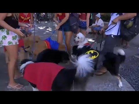 Βραζιλία: Καρναβάλι για κατοικίδια