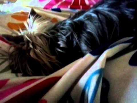 Yorkshire Terrier Kathy ep 4: Kathy la 9 luni