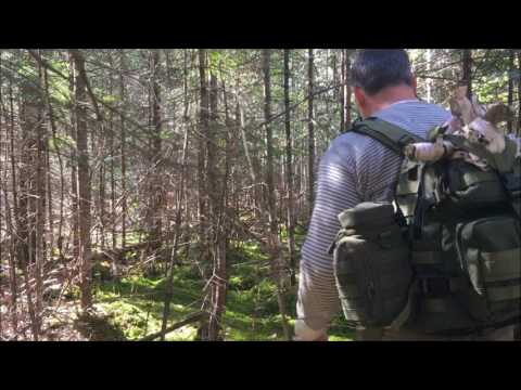 Springtime Adventure In The Boreal Forest: Emergency Fire