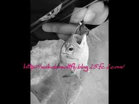 Salt water fly fishing small trevally