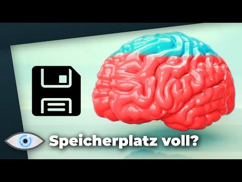 Wie Viel Gigabyte passen ins Gehirn?