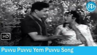 Sabhash Suri Movie Songs - Puvvu Puvvu Yem Puvvu Song - NTR - Krishna Kumari