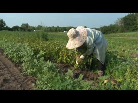 Market -  From Refugee to Minnesota Farmer -  Xang Vang