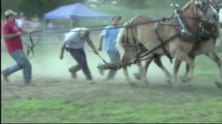 Horse Suffers a Terrible Fall During a County Fair Horse Pull