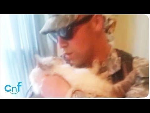 il soldato rientra a casa dopo mesi: ecco come viene accolto dal gatto