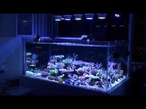 ... lite aquarium controller automate and protect your reef tank