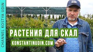 Выбор растений для посадки в искусственные скалы! Ландшафтный дизайн