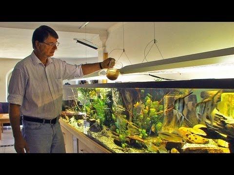 Aquarianer mit Leidenschaft: Ernst-Otto von Drachenfe ...