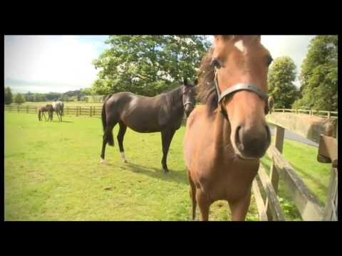 Tattersalls October Yearling Sale Book 1 Feature (From Irish Horse TV)