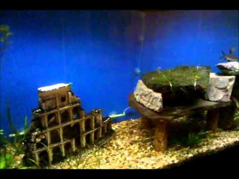 Two 125 Gallon Fish Tanks on Wheels