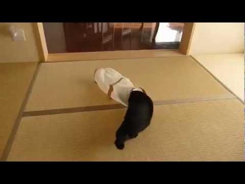 Ataque felino por sorpresa
