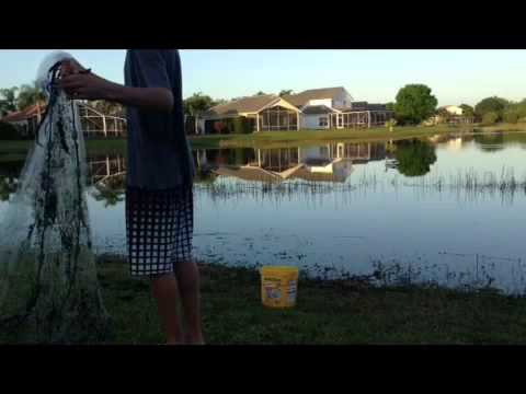 Cast netting in my pond