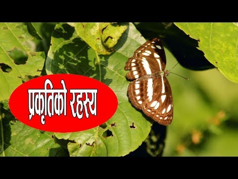 (The Beauty of Nature    East Nepal    LAL ENTERTAINMENT - Duration: 3 minutes, 18 seconds.)