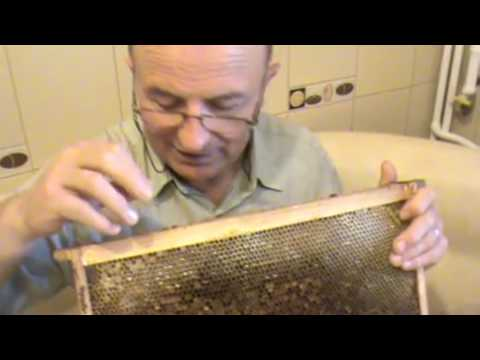 The beekeeper talks about a wonder product of the bees: The honey uncappings