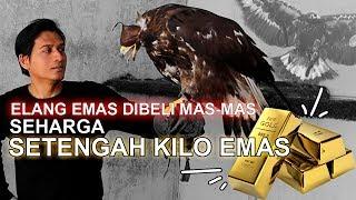 Video Elang Emas Dibeli Mas-Mas Seharga Setengah Kilogram Emas MP3, 3GP, MP4, WEBM, AVI, FLV Agustus 2019