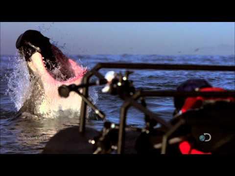 Shark Week -  Sunday | Show Me Your Teeth*
