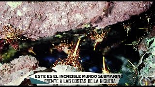 El mundo submarino de La Higuera bajo amenaza: #SalvemosLaHiguera