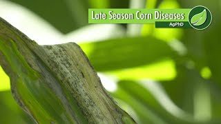 Brian and Darren Hefty talk about the different types of diseases that might happen in your corn field late in the season, and the options for controlling those diseases.