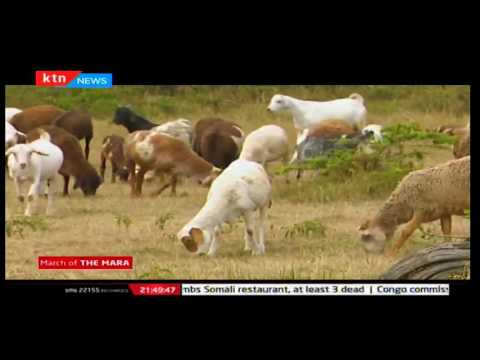 Weekend Prime: March of the Mara by Dorcas Wangira 02/10/2016