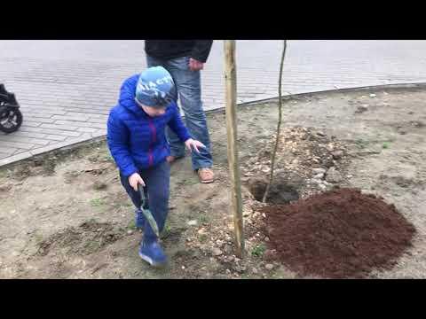 Wideo1: Sadzenie drzew w Śmiglu