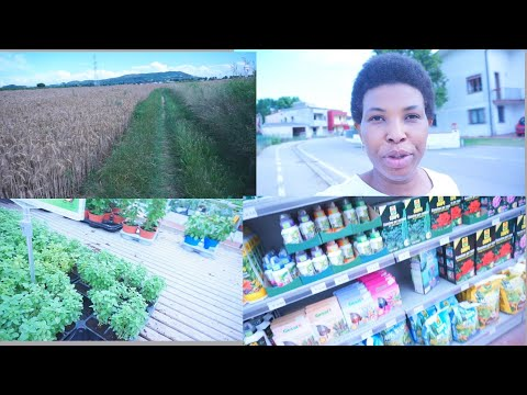 Come with Me : Plant Shopping/Am Searching for Hoe In Obodo oyibo🙄🙄|  Nigeria Mum Living In Italy