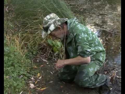 как ловить пиявок для рыбалки