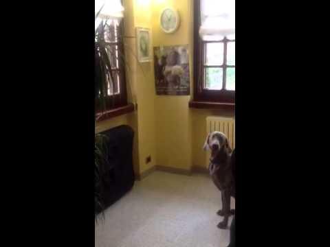 Quarzo di GreysBeth (видео)