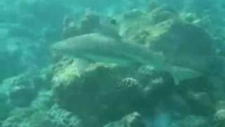 акватория рыбалки ocean tv
