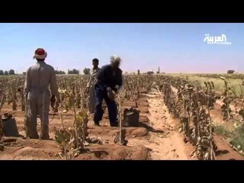 رصد للاستثمارات السعودية في السودان