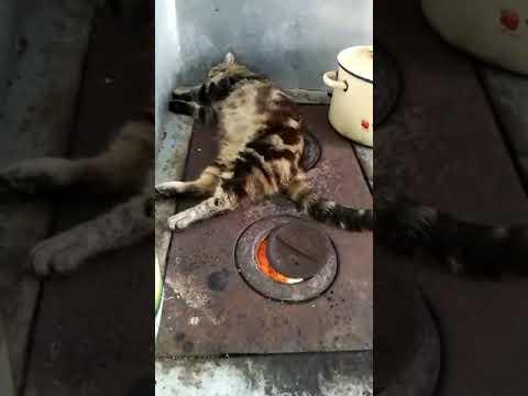 Тугоплавкий кот