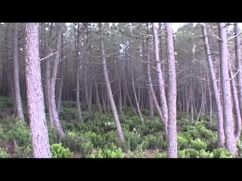 Les forêts en Tunisie