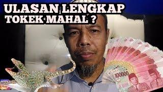 Video ALASAN  TOKEK HARGANYA sampai MILIYARAN..!!!  SERTA ALASAN KENAPA SUSAH CAIRNYA.. TIPS & TRIK... MP3, 3GP, MP4, WEBM, AVI, FLV Februari 2019