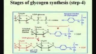 Mod-01 Lec-21 Pentose Phosphate Pathways Glycogenesis&Glycogenolysis